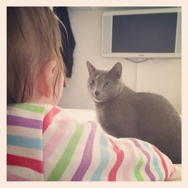 Pixel och Ada stirrar rätt mkt på varann men undviker närkontakt.