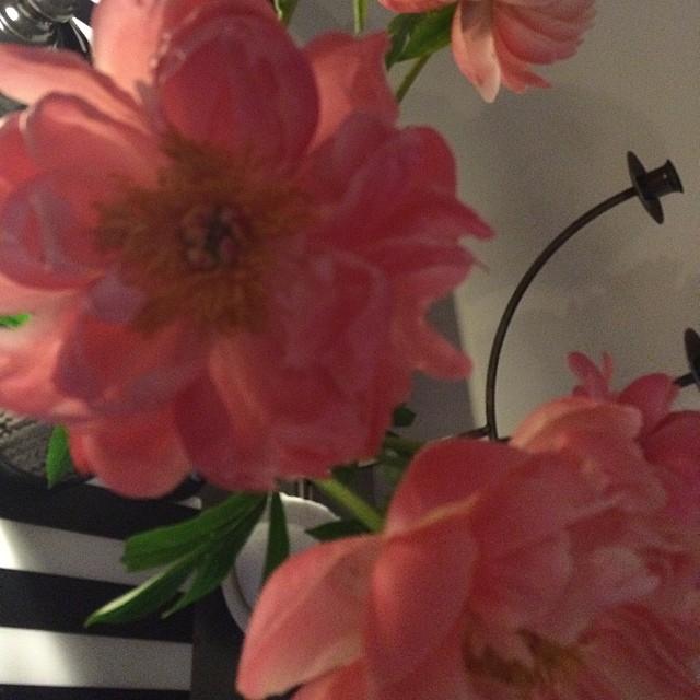 Köpte fina blommor idag.