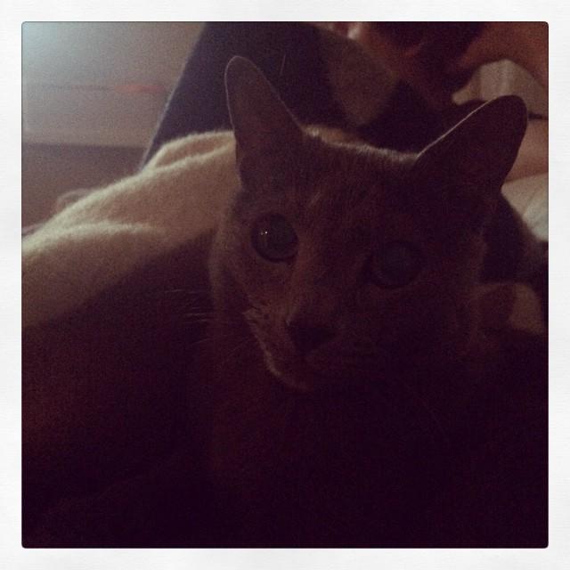 #caturday med #pixelkatten på magen.