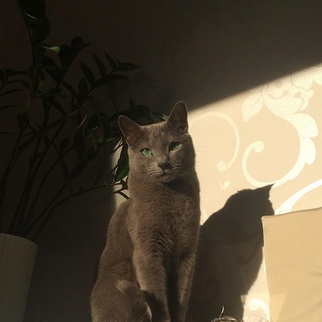 Snyggot #pixelkatten njuter i solen.