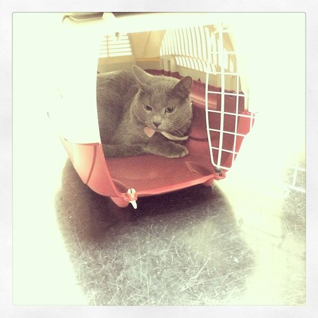Med stackars @pixelkatten hos veterinären för 4:e gången senaste månaden :(